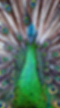 PP5DK5_edited.jpg