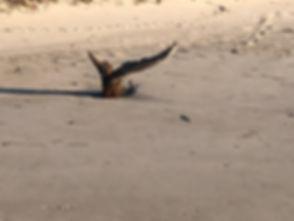 tail.jpg