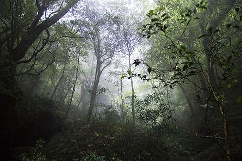 Japan-forest.jpg