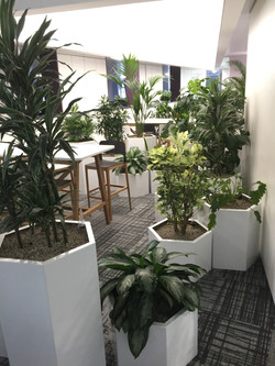 Hexagonal Plant Displays