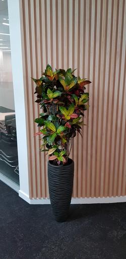 Slough Plant Display