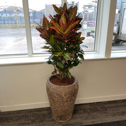 Plant Display for Office
