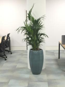 Office Plants