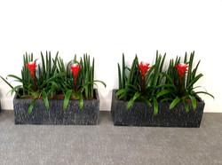 Flowering Plant Trough