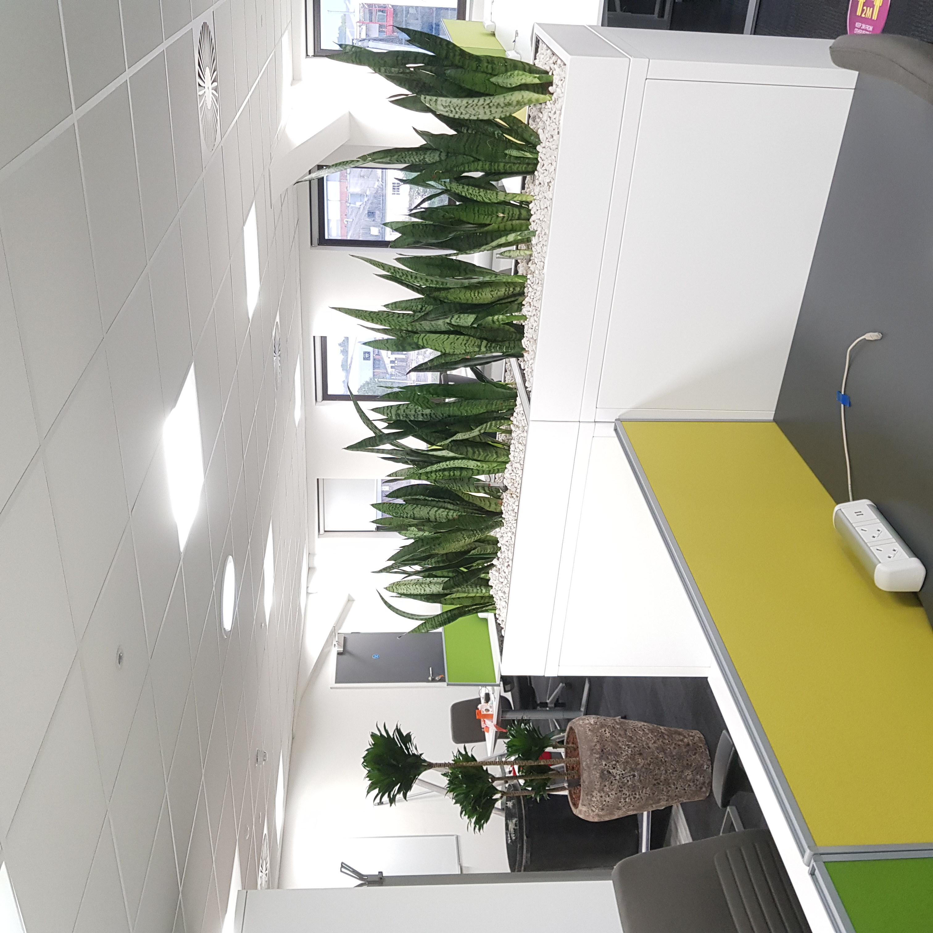 Large Office Plant Displays