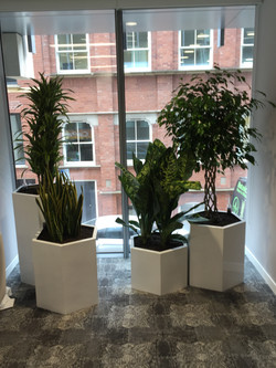 Tropical Plant Displays