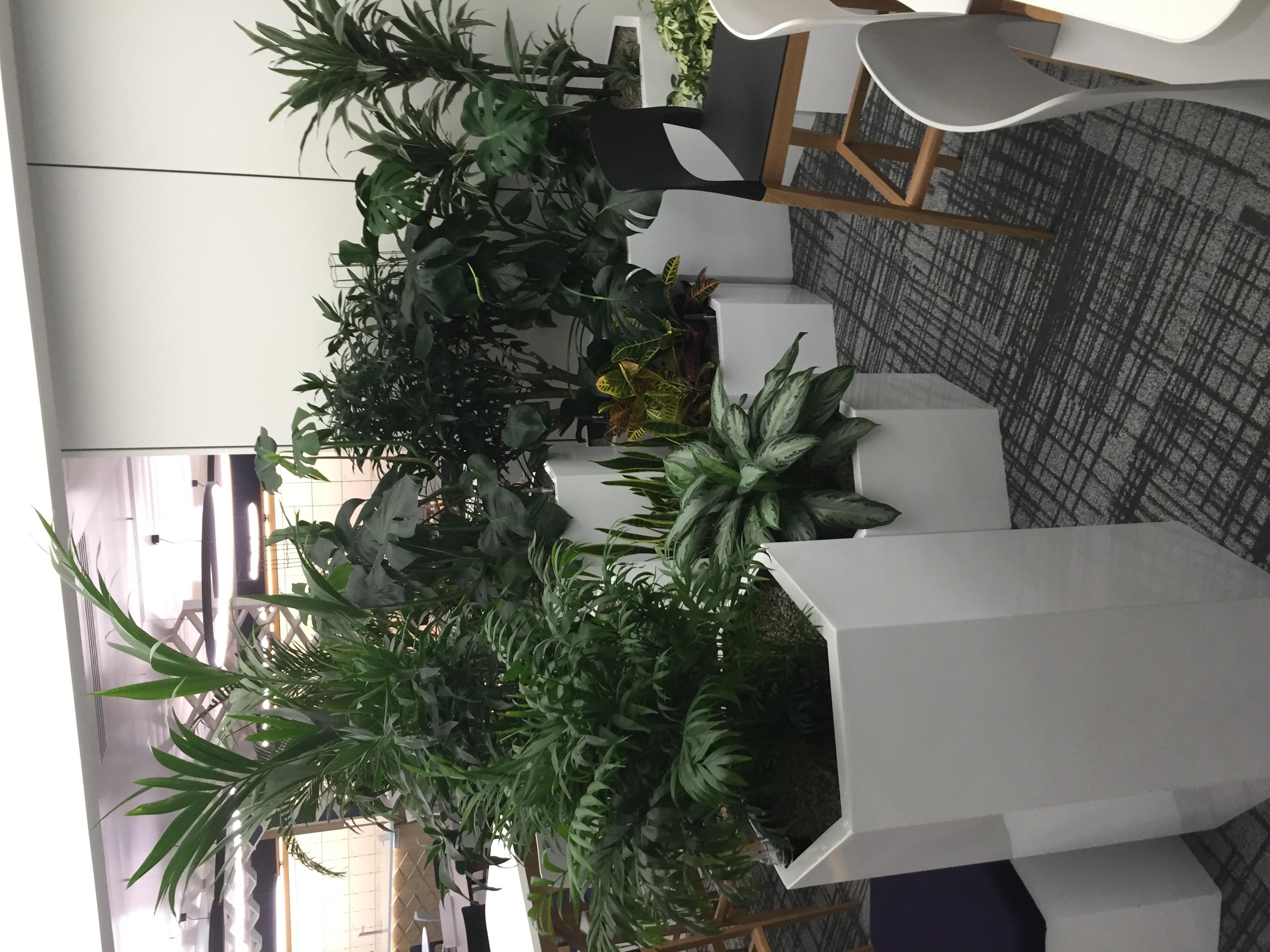 Corporate Office Plants - Birmingham