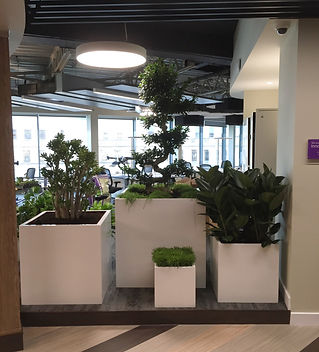 Bristol Plant Displays.jpg