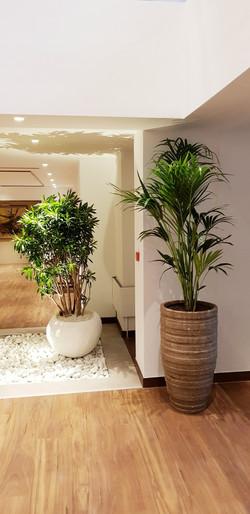 Large Corporate Plants - London