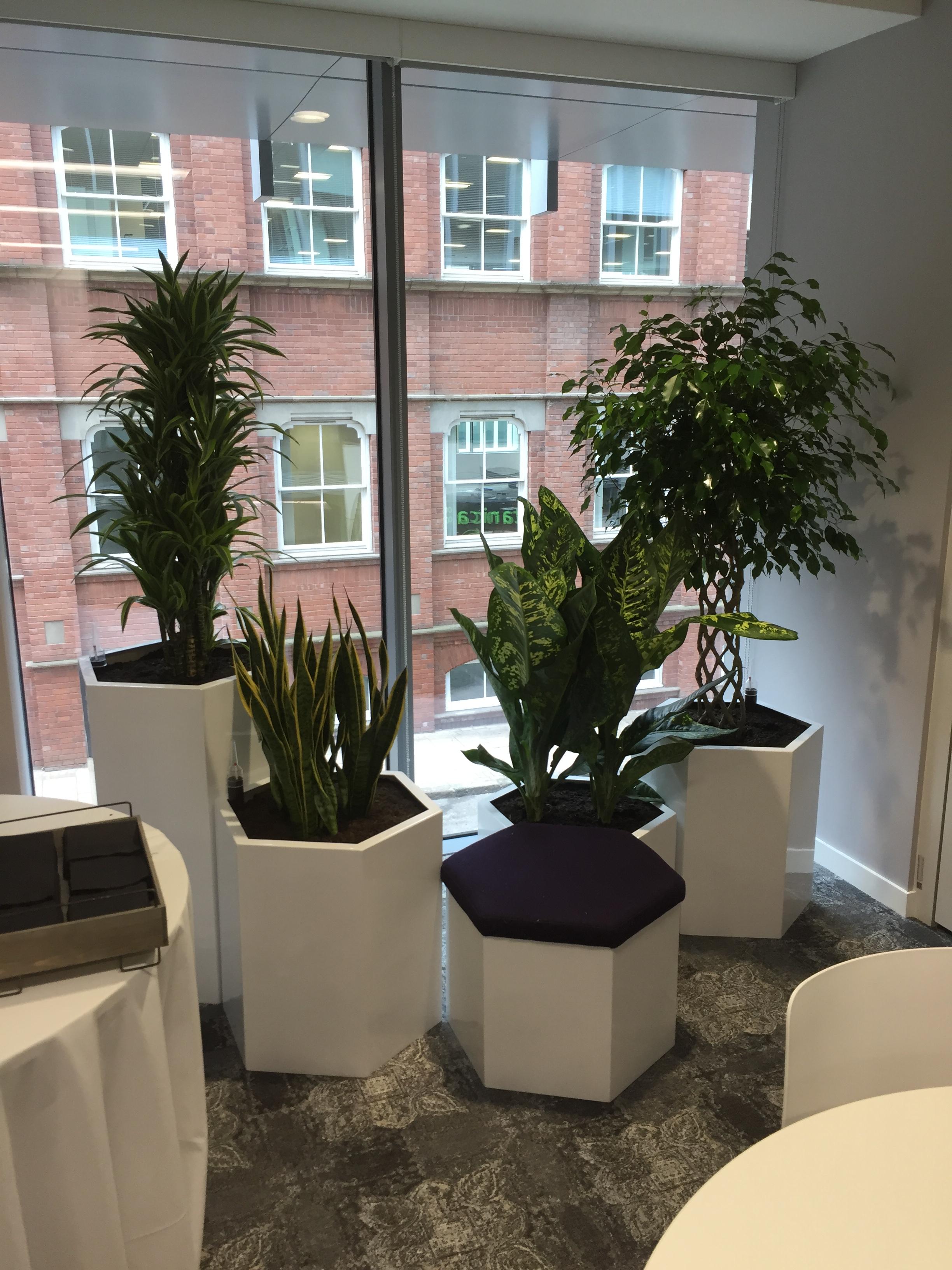 Interior Plant Displays - Birmingham