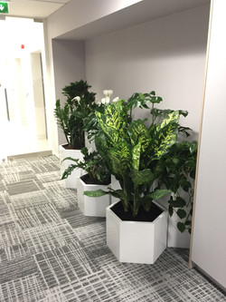 Interior Plant Display - Birmingham