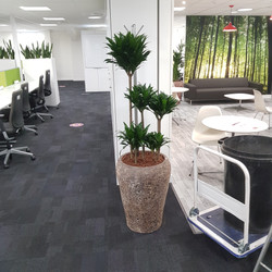 Corporate Office Plant