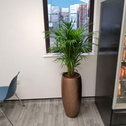 Interior Design Planting