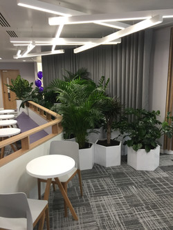 Large Interior Plant Display