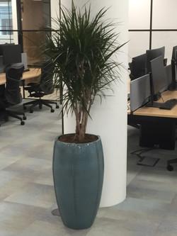 Office Plants - Xerox
