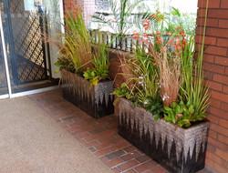 Exterior Plants - London