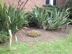 Large Exterior Bed