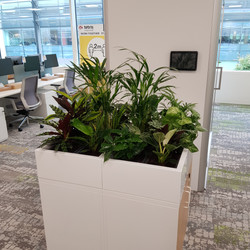 Mixed Tropical Plants in Trough