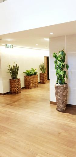 Plant Displays - London