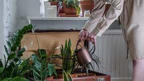 A Beginner's Guide to Sustainable Lifestyle