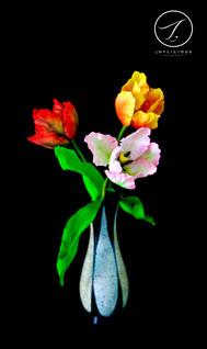 Sugar Parrot Tulips