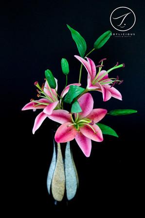 Sugar Star Gazer Lilies