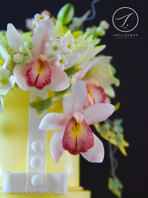 Sugar Cattleya Orchid
