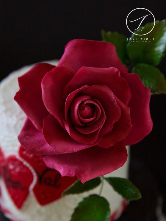 Sugar Deep Red Rose