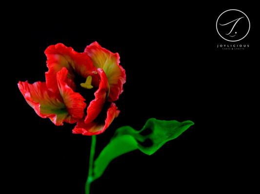 Sugar Red Parrot Tulip