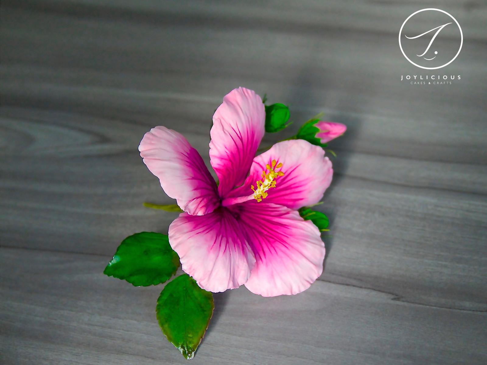 Sugar pink hibiscus home joylicious cakes and crafts sugar pink hibiscus izmirmasajfo
