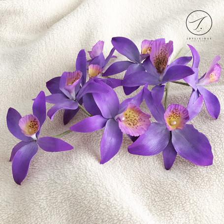 Sugar Violet Wild Orchids
