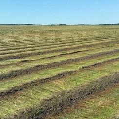 Cotton Versus Linen in Sustainability