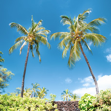 (not so) secret cove, Maui, 2020