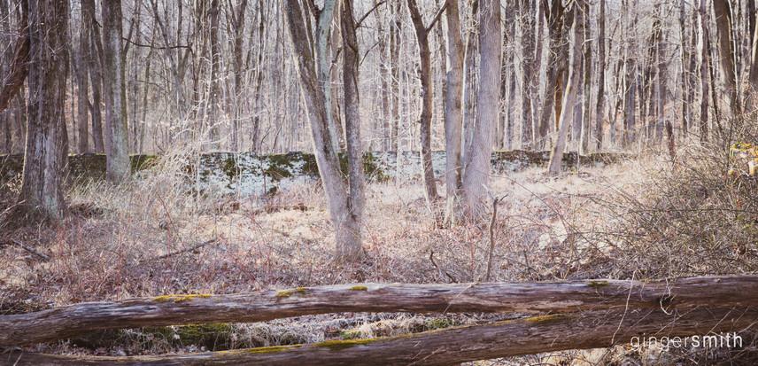 neon moss + elder wall | sourland mountain, 2020