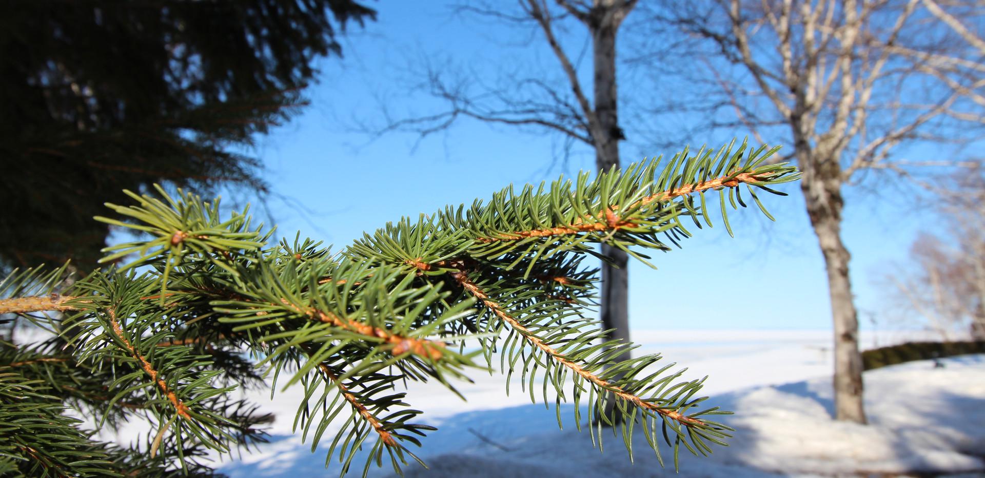 L'hiver au Chalet Doremi (8).JPG