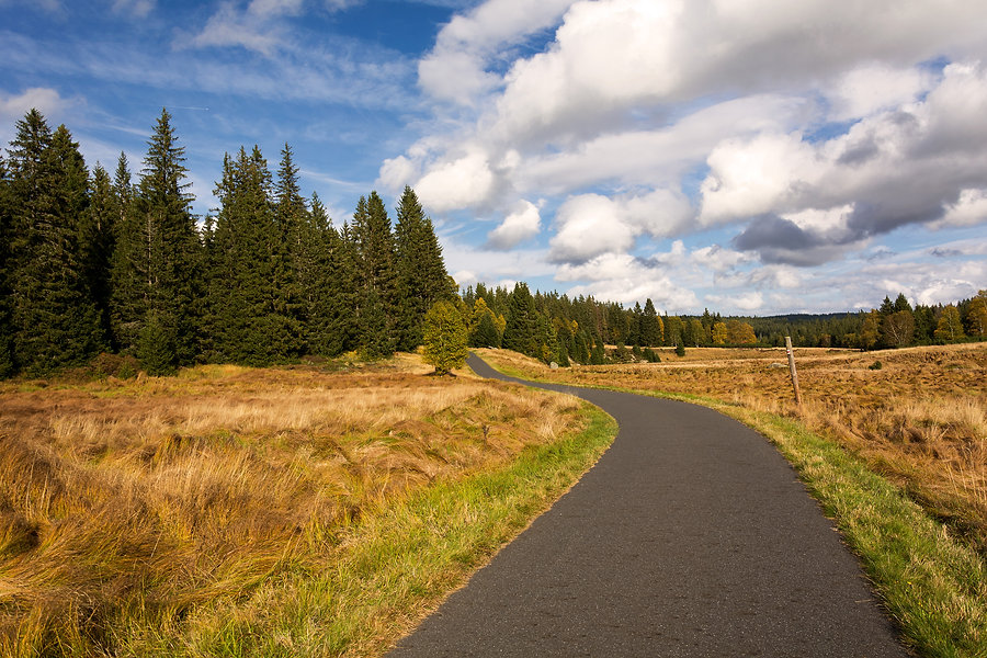 road-in-forest.jpg