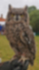 Enzo, South African Eagle Owl