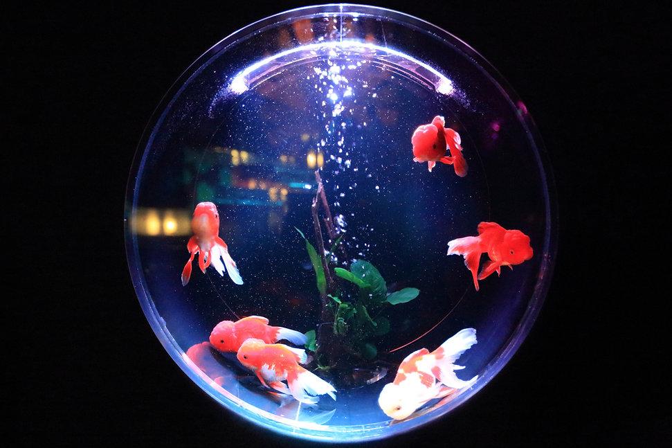 Round Fish Bowl