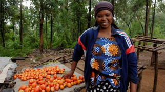How governments can support agriculture insurance