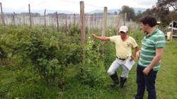 Carlos Arturo Alarcone (agricultor TF) y Antonio Forero (agronomo TF)