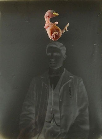 assemblage with found negative and baby bird.