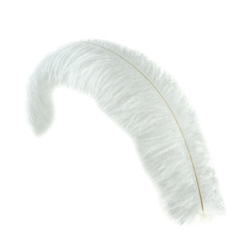 Ostrich Feather - 12in to 26in