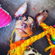 Cat - Pupstar � Owner - Ella Smith � Dog - Freckles.jpg