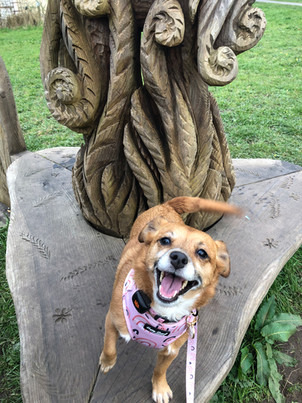 Cat - Happiest Hound � Owner - Lily Vincent (Abbie) � Dog - Lily.jpg