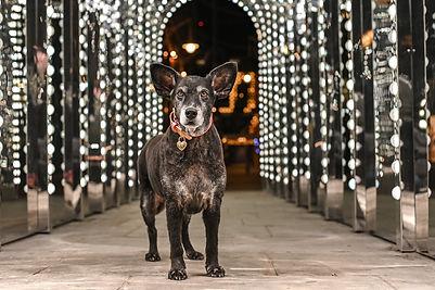 Belhina PAAWstival 2021 Dog Awards
