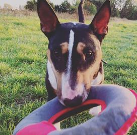 PAAWstival_2021_festival_dog_training.jpg