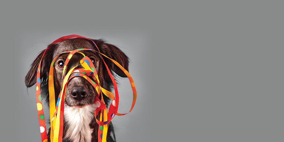 Paawstival_dog_ribbonLR_Vertus.jpg