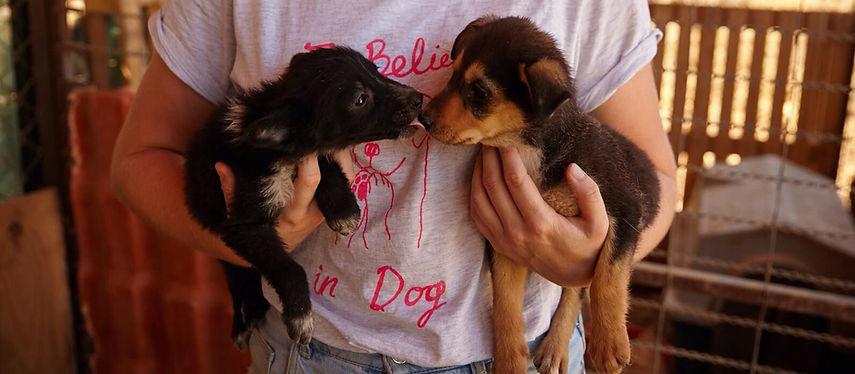 International-stray-dog-rescue-1-e157416