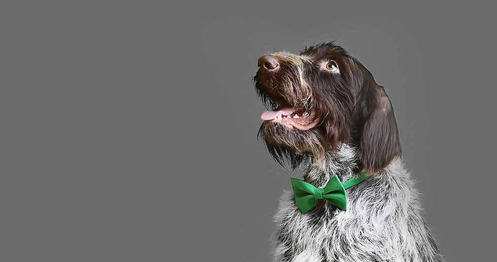 PAAWstival_Dog_Bow_tie.jpg