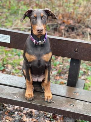 Cat - Happiest Hound � Owner - Rachael Clift � Dog - Daisy.jpg